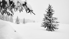 Merry Christmas  - Winterwonderland in High-Key  -     Merry Christmas! Frohe Weihnachten!¡ Feliz Navidad! Buon Natale! Joyeux Noël ! (W_von_S) Tags: winter winterlandschaft winterpanorama wintertime winterwonderland snow schnee snowscape snowlandscape snowshoehike schneeschuhwanderung schneelandschaft trees bäume alpen alps hindenburghütte wvons werner sony sonyilce7rm2 merrychristmas felizanonovo feliznavidad ¡felizañonuevo froheweihnachten white blackwhite blackandwhite schwarzweis sw monochrome bavaria bayern highkey ¡feliznavidad buonnatale joyeuxnoël bomnatal wesołychświąt godjul vrolijkkerstfeest