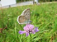 Butterfly 1905 (+1800000 views!) Tags: butterfly borboleta farfalla mariposa papillon schmetterling فراشة