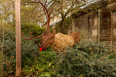 Happy Christmas! (Keith now in Wiltshire) Tags: sculpture reindeer christmas rudolph rednose antlers garden abbey lacock nationaltrust shrub wiltshire tree