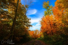 Lost in the forest... (corineouellet) Tags: path hiking bluesky trees forêt leaves paysage landscape nature forest hdr colors autumn autumnvibes autumncolors autumnal automne