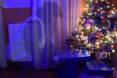 Feliz Navidad.Merry Christmas (gabrielg761) Tags: olentzero navidad vascos carbonero regalos niños