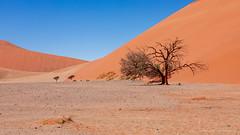 At the base of dune 45 (G. Postlethwaite esq.) Tags: namibdesert namibia sossusvlei unlimitedphotos dune45 person photoborder sanddunes sky southernafrica tree