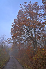 Into the Mist (pstenzel71) Tags: deutschland landschaft rudolstadt wege autumn mist fall fog thüringen nebel herbst thuringia darktable tree way path baum ilce7rm3 sel24105g