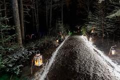 Forest Path (Karen_Chappell) Tags: woods forest night path trail snow lights longexposure botanicalgarden stjohns newfoundland nfld canada eastcoast avalonpeninsula atlanticcanada winter december holiday lantern lanterns christmas noel xmas trees green evergreen canonef24105mmf4lisusm