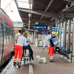 Herrchen gerettet... (gatierf) Tags: dog hanau notarzt bahnsteig zug publictransportation