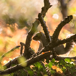 backlit squirrel