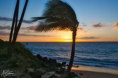 Breezy sunset (Kirt Edblom) Tags: maui mauihawaii kihei kiheihawaii hawaii sunset sunlight sun gaylene wife water waves waterscape milf blue bluesky bluewater orange palm palmtree palmtrees tree trees tropical sand beach rocks rock silhouette clouds windy pacific pacificocean ocean kirt kirtedblom edblom luminar nikon nikond7100 nikkor18140mmf3556