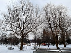 Winter afternoon... (angelinas) Tags: wintermood winter winterscenes snow nevica neige trees treelover arbres arbeli park parc montreal quebec canada moody mood atmosphere tranquil still stillness afternoon walkinglandscapes outdoors