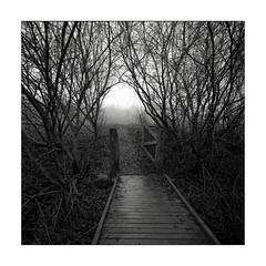 The bridge (K.Pihl) Tags: berggerpancro400 trees gate bridge landscape hc110b hasselblad500cm monochrome pellicolaanalogica analog blackwhite schwarzweiss bw distagon50mmf40 film fog