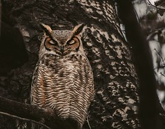 December 20, 2019 - Sleep owl. (Jessica Fey)
