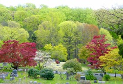 Spring Colors in Tarrytown Cemetery (Stanley Zimny (Thank You for 46 Million views)) Tags: tree color tarrytown cemetery graves spring red green seasons maple