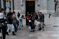 DSCF9373 (Ockesaid a.k.a Ockes a.k.a. Oke) Tags: ockesaid joellugo fotógrafo photographer fujixt10 fujifilm xt10 bellasartes zócalo cdmx streetphotography streetphoto classicchrome dog people cel movil