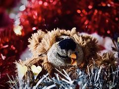 MacroMondays Christmas (delnaet) Tags: macromondays bestwithholidaysis hmm warmth