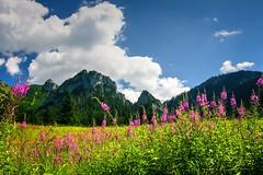 Tatra meadow (Siuloon) Tags: dolinakościeliska tatry tatra montains meadow flores fiore flor floraciones flower flowers słońce sun sky clouds green view landscape landscapes landschaft plant