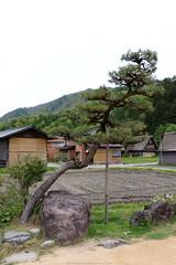 Shirakawa-go (Rick & Bart) Tags: 白川郷 shirakawago worldculturalheritagesite unesco japan nippon 日本 rickbart city landoftherisingsun rickvink canon eos70d gifu museum openairmuseum tree