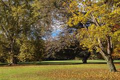 Couleurs d'automne à défaut de neige!! (mrieffly) Tags: canoneos50d couleursdautomne parcdeschoppenwihr arbres feuillesmortes alsace htrhin