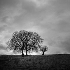 Trees and Clouds (Deepmike70) Tags: landscape nature blackandwhite bw sky clouds trees autumn winter grass 645z pentax