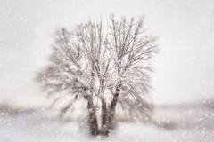 3492 (Elke Kulhawy) Tags: winter white wolken tree baum nature art abstract natur schnee snow landscape landschaft lensbaby lensbabycomposer licht light weiss weis color