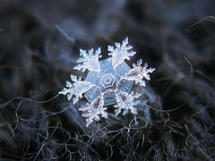 Real snowflake (Olga Sytina & Alexey Kljatov) Tags: snowflake background real nature photo snow ice crystal cold winter christmas season weather climate temperature atmosphere frost abstract macro closeup detail detailed object unique individuality natural shape symmetry structure pattern icy microscopic elegant ornate northern wonder design element seasonal frozen star holiday symbol sign single flake light intricate complex beautiful rare hexagonal threads снежинка снежинки кристалл снег лед зима мороз макро blue black dark