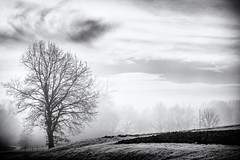 Mystery Trees... (Ody on the mount) Tags: anlässe blackwhite bäume em5iii filmkorn fototour himmel landschaft mzuiko124028 omd olympus pflanzen silhouette solitär wolken bw blackandwhite clouds grain landscape miraclesofcreation monochrome sw savingtheclimatebytrees schwarzweis sky trees