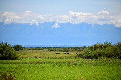 Kabwoya Wildlife Reserve, Congo beyond Lake Albert (supersky77) Tags: uganda africa lakealbert rift valley