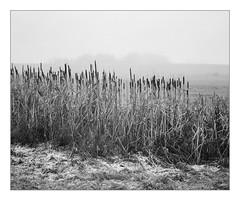 Foggy morning at Lake Kell (werner-marx) Tags: analog film meinfilmlab mediumformat agfaisoletteiii solinar kodaktrix400 kellamsee lakekell fog foggy mist