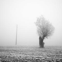 First Frost (Bernd Walz) Tags: tree frost ice hoarfrost landscape winter blackandwhite bnw bw monochrome square fineart fog mist silence calmness
