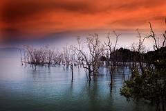 Evening, Dead Mangroves, Bako National Park, Borneo, Malaysia (klauslang99) Tags: klauslang nature naturalworld mangroves dead water borneo malaysia ocean bako national park