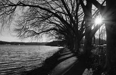 Hardenbergufer (frankdorgathen) Tags: alpha6000 sony18200mm winter sonne sun backlight gegenlicht nature natur baum tree ruhrgebiet ruhrpott essen see lake baldeneysee hardenbergufer