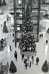 Merry Christmas 2019 Boulevard Berlin (rieblinga) Tags: weihnachtsbaum boulevard berlin schlosstrasse einpackservice weihnachten 21122019 analog revue ac4 kodak tmax 100 adox fx 39 ii sw 114