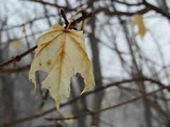 On a Winter's Day (ETFoster) Tags: winter leaf trees eric foster bokeh nebraska woods