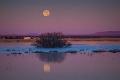 IMG_7596-Whitewater Draw McNeil AZ (Desert Rose Images) Tags: arizona usa full moon landscape water shrub mountain peaks reflections sunrise whitewater draw mcneil az sandhill cranes ©rosemary woods passages