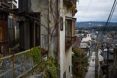 Kujiragaoka (ubic from tokyo) Tags: 50mm ibarakiprefecture japan nikkorz50mmf18s nikon nikonz6 茨城県 鯨ヶ丘 nikkor