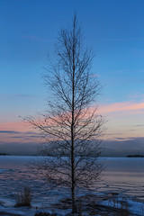 Sunset Tree (CraDorPhoto) Tags: canon6d sunset landscape tree silhouette nature outside outdoors espoo finland sky clouds