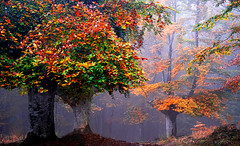 AUTUMN 13 (juan luis olaeta) Tags: photoshop landscape paisajes raw fujifilmxt3 forest bosque basoa tree fog laiñoa nieblas autumn otoño udazkena nature basquecountry