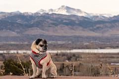 Longs Peak (flanger11) Tags: longspeak dog pug boulder davidsonmesa mountainviews mountains rockymountains