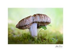 Aging Gracefully (g.femenias) Tags: mushrooms fungi moss bokeh woods nature naturallight macro macrophotography stackfocus textures camídelinfern bonany petra mallorca