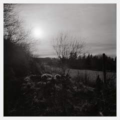 Winter Morning (III) (Maximilian Busl) Tags: leupoldsgrün bayern deutschland blackandwhite landscape germany sky winter hasselblad ilford hp5 film analog distagon zeiss