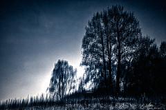 2019-12-23 16.15.04 - Vandskud, Uge 52, Nørre Å, Fladbro, Randers - _DSC6613-1 - ©Anders Gisle Larsson