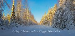 Hyvää Joulua, Merry Christmas (pohjoma) Tags: landscape scenery snow sunshine finland winter talvi merrychristmas hyvääjoulua winterbeauty