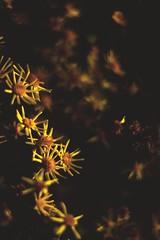 Orange (alesreman) Tags: flowers pentax darktable 5014 k k20d flowerscolors