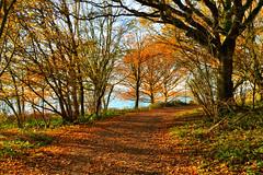 Forested paths of Rutland water (Drew Scott :))) Tags: outdoor england rutland rutlandwater forest wood path track trail leaves tree trees bush branch trunk bark shadow sun sunlight autumn nature nikon d3200 nikkor