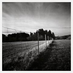 Winter Morning (II) (Maximilian Busl) Tags: leupoldsgrün bayern deutschland blackandwhite landscape germany sky winter hasselblad ilford hp5 film analog distagon zeiss