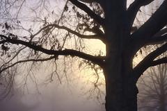 Winter Morning - Fog Southeast (Modkuse) Tags: fog foggymorning foggy nature natural sunrise natureart art artphotography artistic artisticphotography photoart fineartphotography fineart tree trees sun wintersunrise fujifilm fujinon fujifilmxh1 fujinonxf1655mmf28rlmwr xf1655mmf28rlmwr captureone captureonefujifilmsimulation outdoors velvia fujifilmvelviasimulation