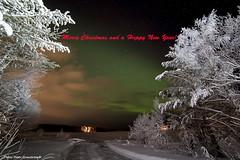 Northern light! (petergranström) Tags: approved northern light norrsken sky himmel snow snö stars stjärnor trees träd shrubs buskar lake sjö