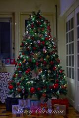 Feliz Natal * (lebre.jaime) Tags: natal navidad noël natale christmas weihnachten クリスマス digital fullframe fx ff nikon d600 voigtländer nokton 58f14sliis nokton5814sliis affinity affinityphoto