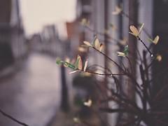 December (J.C. Moyer) Tags: volendam rustic rustiek straatfotografie streetphotography lumix025mm lumix025 lumixgx80 hh025 dmcgx80 lumix panasonic rain regen straat street kleur december blaadjes leaves colour color thenetherlands holland edam