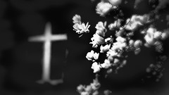 For all animals that have been terribly tortured in the slaughterhouse for our Christmas dinner (pastadimama) Tags: flowers abstract art bw blackbandwhite slaughterhouse animals christmas dinner torture