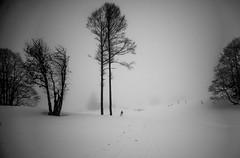 Snow Silence (PaxaMik) Tags: plateauderetord retord ain bugey fermederetord tree winter winterlandscape wintertree silence solitu silhouette black blackandwhite