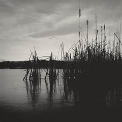 day 356 (Randomographer) Tags: project365 lake water longmont landscape scenic clouds earth trees rock processed nature natural 356 365 vii colorado silhouette shadow black white bw monotone monochrome typha monocotyledonous flowering plant wetland bulrush reedmace cattail punks grass cumbungi raupō reflection pond day